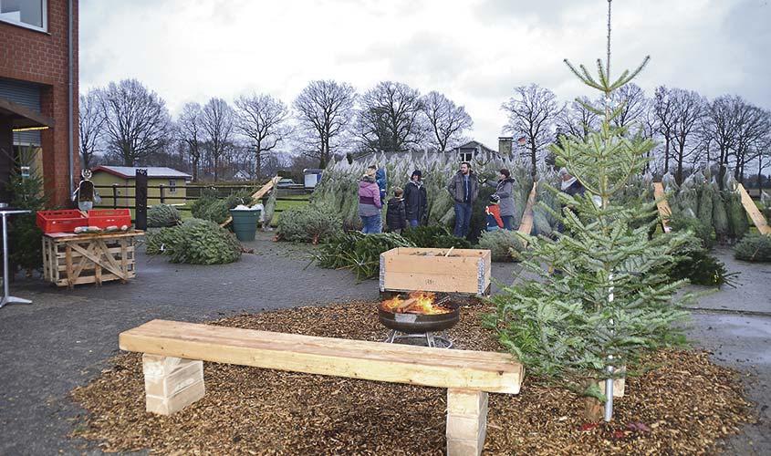 Best 28 weihnachtsbaum lieferservice best 28 weihnachtsbaum lieferservice tannenbaum - Weihnachtsbaumverkauf hamburg ...